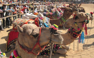 Indien_pushkarfair-photo17_PushkarFestivals